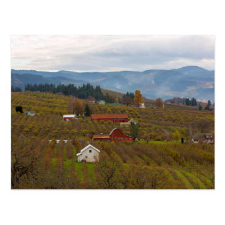 Fruit Orchard Farmland in Hood River Oregon Postcard