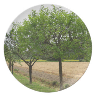 Fruit trees with green leaves in spring plate