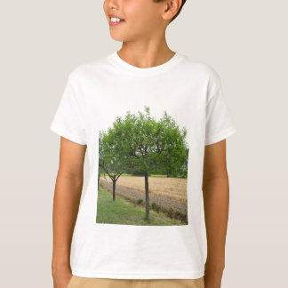 Fruit trees with green leaves in spring T-Shirt