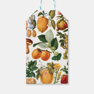 Fruits Gift Tags