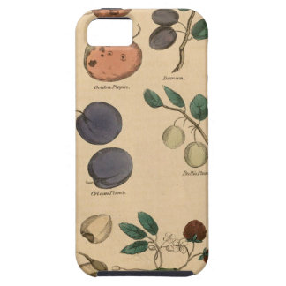 Fruits & Leaves iPhone 5 Cases