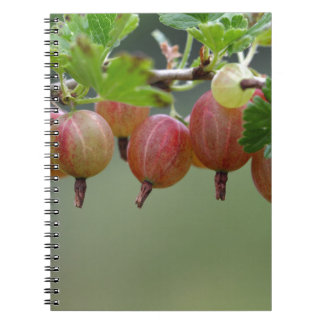 Fruits of a gooseberry notebooks