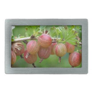 Fruits of a gooseberry rectangular belt buckle
