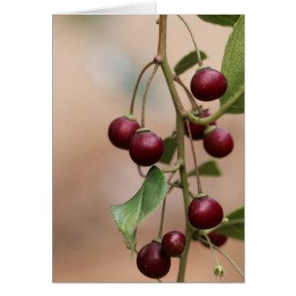 Fruits of a shiny leaf buckthorn card