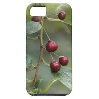 Fruits of a shiny leaf buckthorn case for the iPhone 5