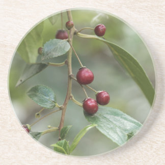 Fruits of a shiny leaf buckthorn coaster