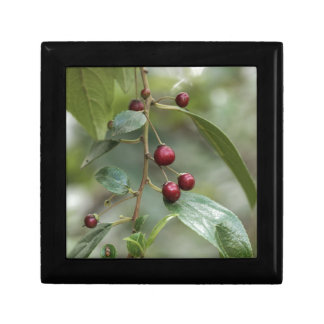 Fruits of a shiny leaf buckthorn gift box