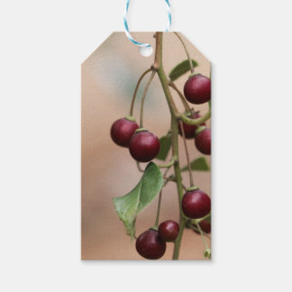 Fruits of a shiny leaf buckthorn gift tags