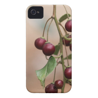 Fruits of a shiny leaf buckthorn iPhone 4 Case-Mate cases