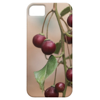 Fruits of a shiny leaf buckthorn iPhone 5 case