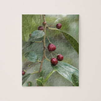 Fruits of a shiny leaf buckthorn jigsaw puzzle