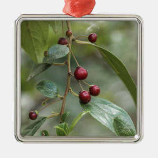 Fruits of a shiny leaf buckthorn metal ornament