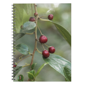 Fruits of a shiny leaf buckthorn notebook