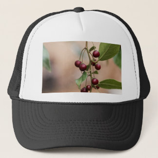 Fruits of a shiny leaf buckthorn trucker hat