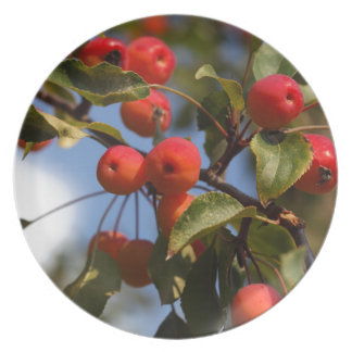 Fruits of a wild apple tree dinner plate