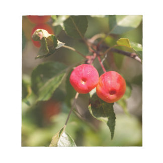 Fruits of a wild apple tree notepad