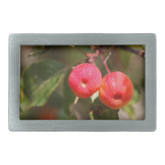 Fruits of a wild apple tree rectangular belt buckle