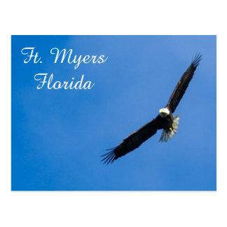 Ft. Myers Bald Eagle postcard