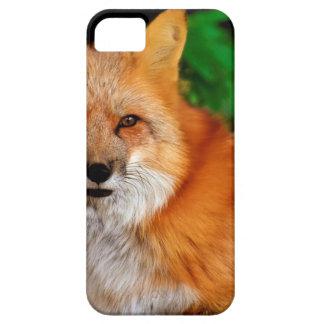Fuchs Fox Animal Case For The iPhone 5