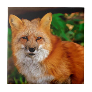 Fuchs Fox Animal Tile