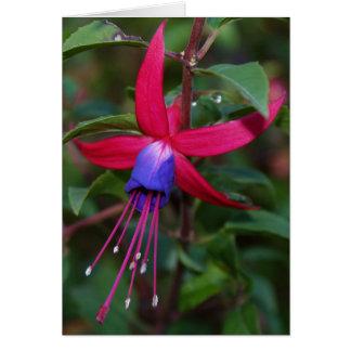 Fuchsia Blossom and Facts Card