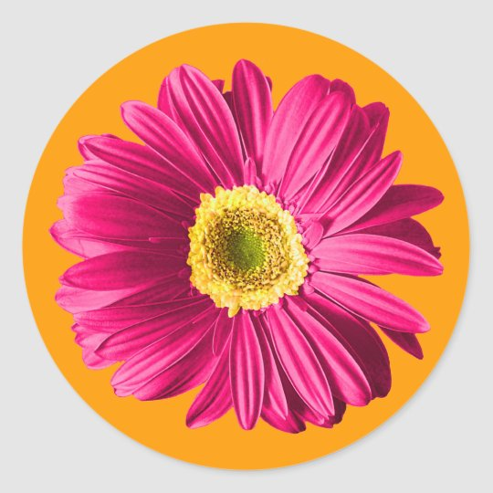 Fuchsia Daisy Flower Classic Round Sticker