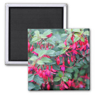 Fuchsia Flowers in Purple Red Magnet