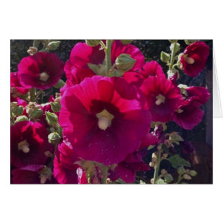 Fuchsia Hollyhocks garden Gifts Card