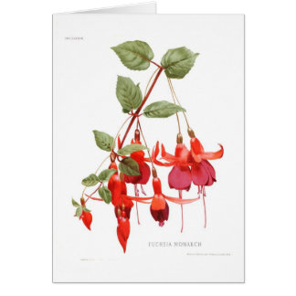 Fuchsia 'Monarch' Card