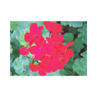 Fuchsia/Pink Flowers Canvas Print