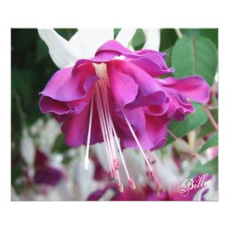 Fuchsia Study Photo Print