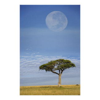 Full moon above acacia trees, Masai Mara, Poster