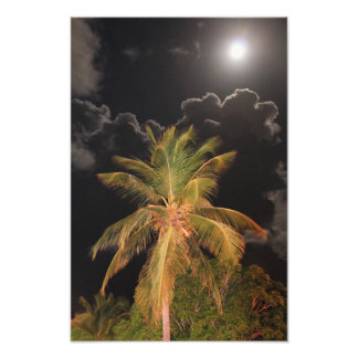 Full Moon over a Tropical Palm Photo Print