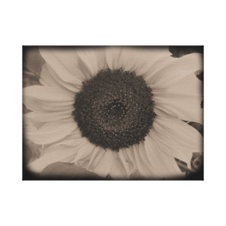 Full Sunflower Face in Diatrope Canvas Print