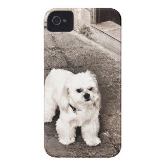 fullsizeoutput_c75 Crabby Dog iPhone 4 Covers