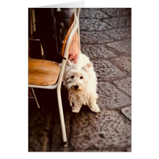 FullSizeRender 18Shy Dog Card