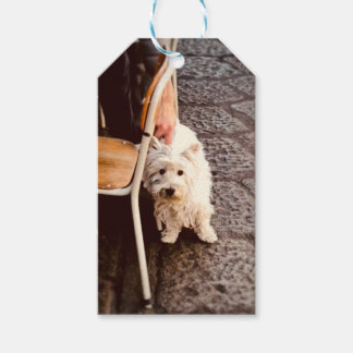 FullSizeRender 18Shy Dog Gift Tags