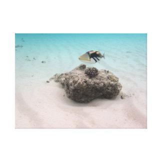 Fun Maldives Snorkeling Adventures Coral Fish Canvas Print