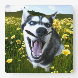 Fun Siberian Husky in the Wildflowers Clock