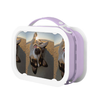 Fun with the Sun Lunch Boxes