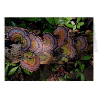 Fungi-covered Log in Hawaiian Rain Forest Card