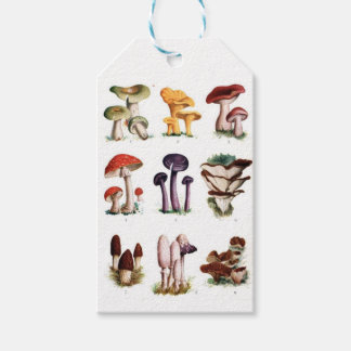 Fungi Pack Of Gift Tags