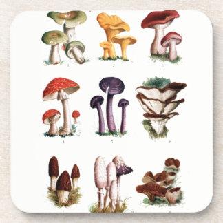 Fungi - Posavasos Coaster
