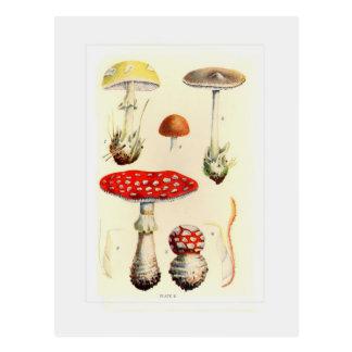 Fungi Postcard