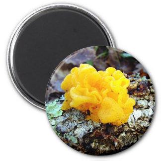 Fungi Tremella Mesenterica Mushroom Magnet