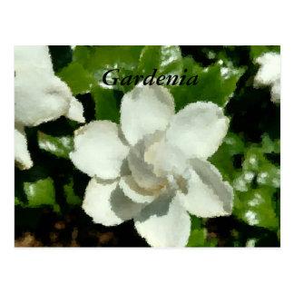 Funky Gardenia Postcard