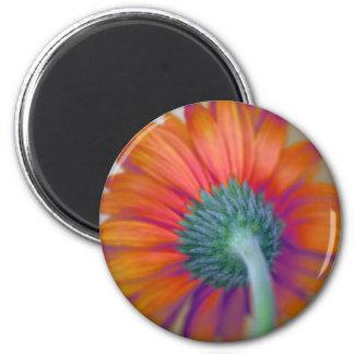 Funky Gerbera 2 Inch Round Magnet