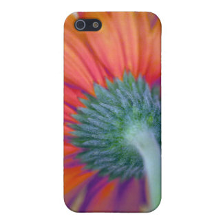 Funky Gerbera Cover For iPhone 5/5S