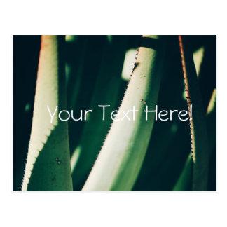 Funky Pale Green Aloe Plants Postcard