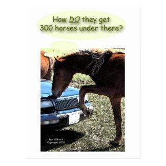 Funny 300 Horse Car Postcard